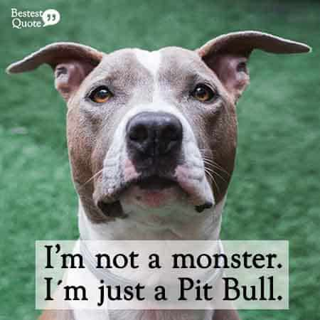 I'm not a monster, I'm just a pitbull