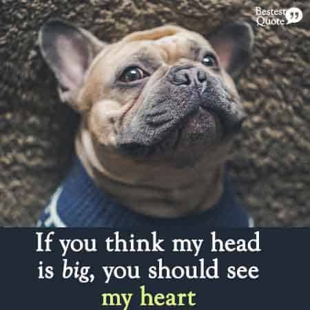 Pitbull quote: If you think my head is big you should see my heart