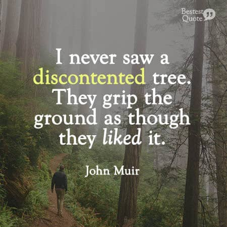 """I never saw a discontented tree. They grip the ground as though they liked it, and though fast rooted they travel about as far as we do."" John Muir"