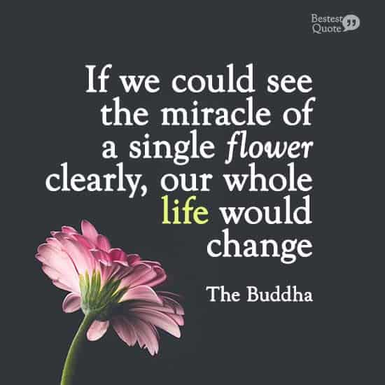 """""""If we could see the miracle of a single flower clearly, our whole life would change."""" The Buddha"""
