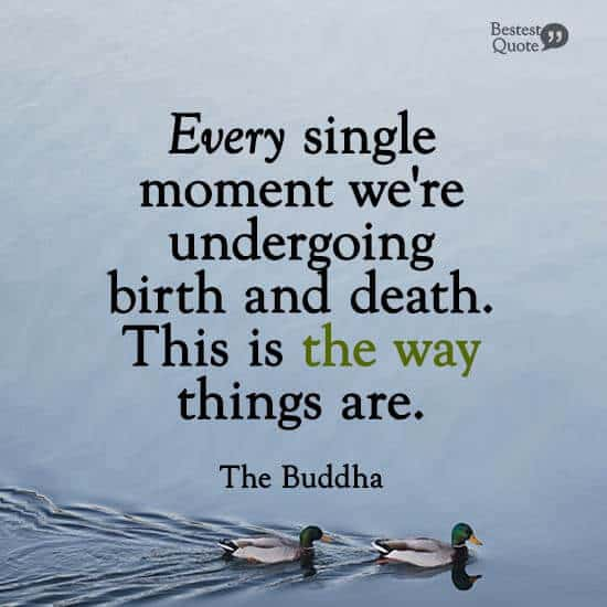 """""""Every single moment we're undergoing birth and death. This is the way things are."""" The Buddha"""